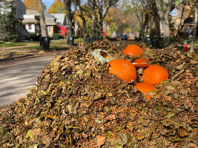 Leaf Collection Starts Monday, October 14